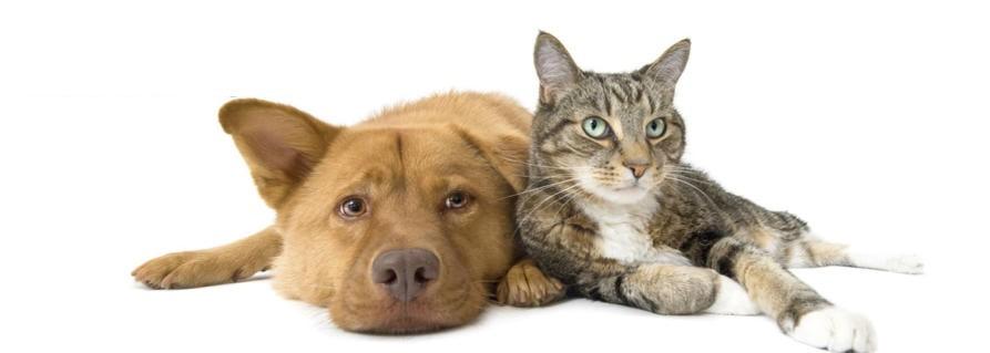 Asturdog. Alimentos y pienso para mascotas. Oviedo - Asturias